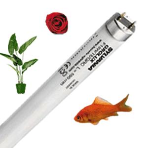 Application Spéciale Aquarium Boucherie Fleur